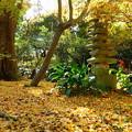 写真: 三渓園-384