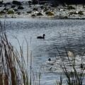 朝の池・・2