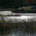 朝の池・・3
