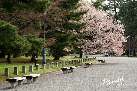 しだれ桜・・21 京都御苑 2010