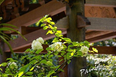 新緑の海蔵寺・・4