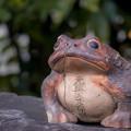 写真: 元興寺福蛙