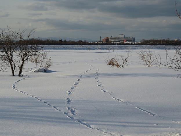 雪原の足跡?