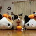 ミカン猫三姉妹