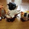 ぽちゃ猫集合!