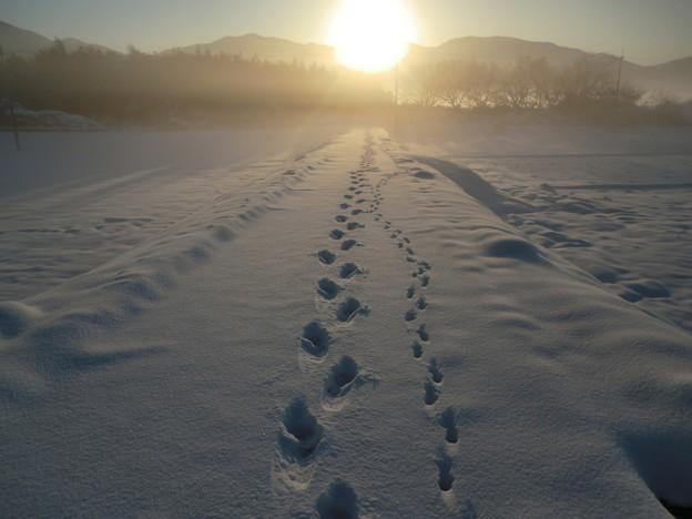朝日へ続く足跡