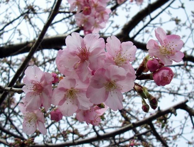Photos: 春ですね
