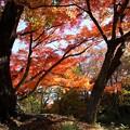 Photos: 二俣城址の紅葉