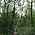 木道を歩く(1)