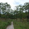 木道を歩く(2)