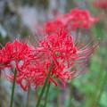 赤色の秋(2)