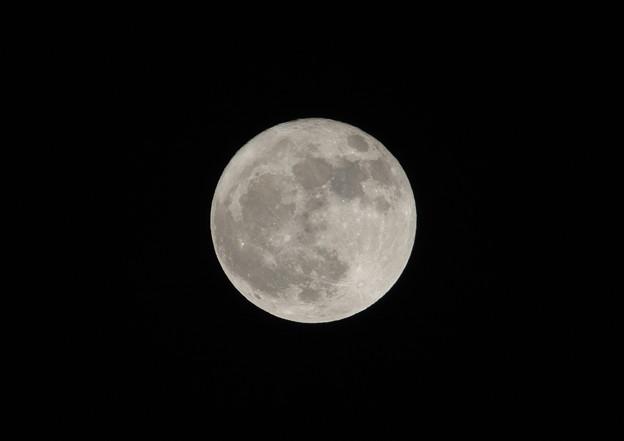 今日は満月