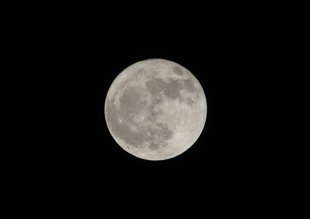 Photos: 今日は満月