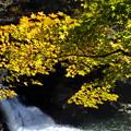 写真: 渓谷の色づき