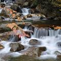 写真: 渓流の流れ 秋