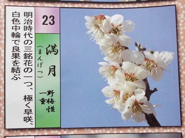 2015_0221花小金井満月021