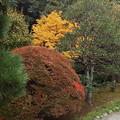 1711010128紅葉の始まり