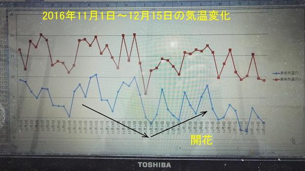 昨年2016年の気温変化