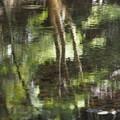 油絵で描いたような森