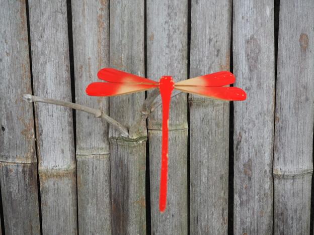 赤トンボの竹とんぼ