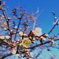 Photos: 春を見つけました!1