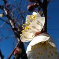Photos: 春を見つけました!2