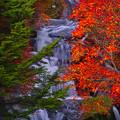 写真: 秋色~