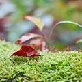 写真: これも秋色~(^^♪