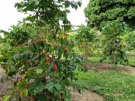 171001-12コーヒー豆