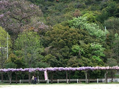 2010年04月30日渋川公園06