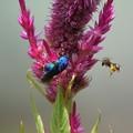 小さなハチとはちあわせ