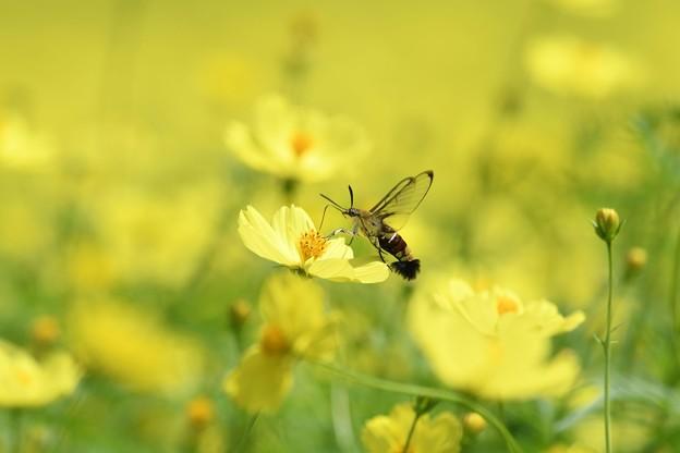 しっぽブラシ蜜のお礼に花掃除
