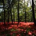 Photos: 見事な赤い絨毯