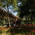Photos: あいあい橋と彼岸花