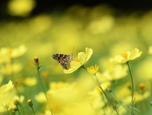 ひめさまが黄色の世界をひとりじめ