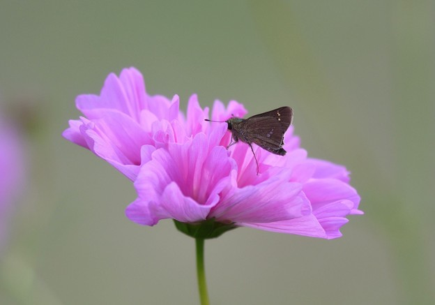 写真: 花園に親指姫が舞い降りる