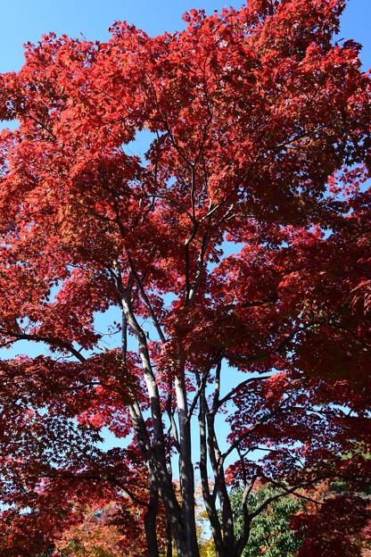 11月上旬昭和記念公園3