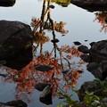 水面揺れ早き紅葉楽しまむ