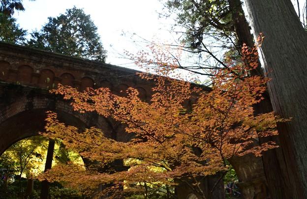 紅葉で一段とおめかし水路閣