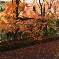 オレンジ色の輝く葉っぱも