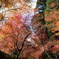 写真: 色とりどり紅葉のトンネルくぐり降り