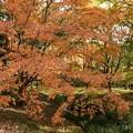糺の森には大きな紅葉がたくさん