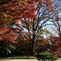 写真: 最後は「散る散る紅葉」に見送られ