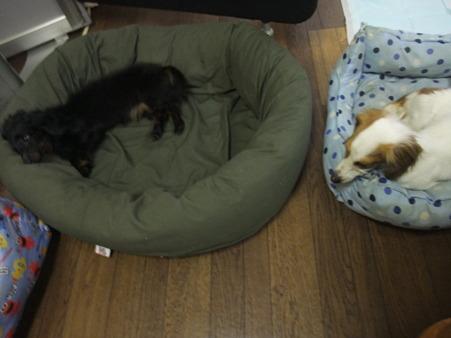 ベッドが分かってます!