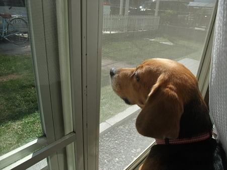 「外行きたい・・・」