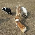 Photos: 基本的に、犬は好きです♪