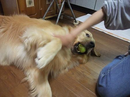 ボールが大好き!
