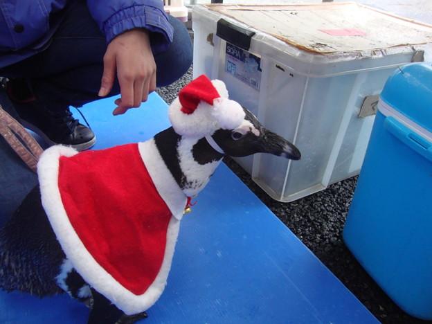サンタペンギン2