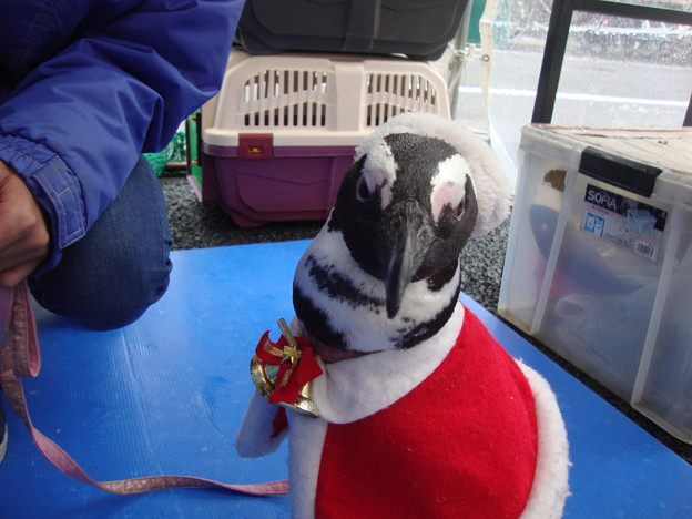 メリークリスマスペンギン