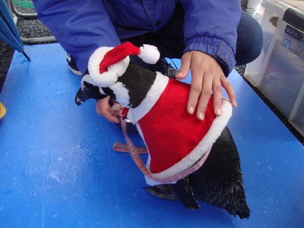 甘えん坊サンタペンギン